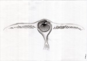Grey owl 2